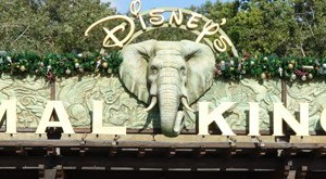 Walt Disney World, Animal Kingdom Entrance