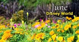 Disney World Crowd Calendar June 2020