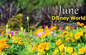 Disney World Crowd Calendar June 2020