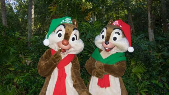 Chip n Dale in Christmas attire at Disney's Animal Kingdom