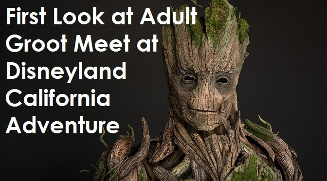 First Look at Adult Groot Meet at Disneyland California Adventure