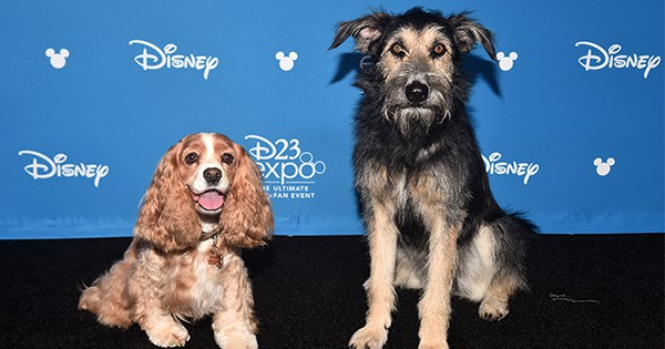 Shelter Dog Stars November 12 in Disney's 'Lady and the Tramp'
