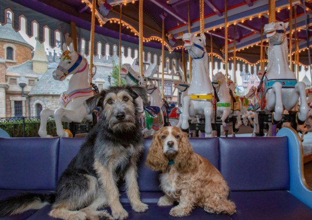 Lady and the Tramp Disney+ Canine Stars Playdate in Disneyland!