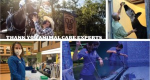 Walt Disney World Celebrates Animal Care Experts and New Series Coming to Disney+