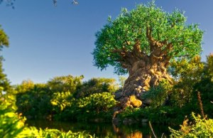 Breaking: Adorable New Animals Have Been Added To Kilimanjaro Safari