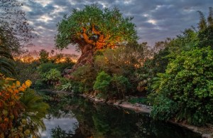 Social distancing policy relaxed for another popular Disney World attraction