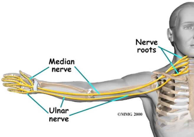 nerves in neck and shoulder diagram 2002 hyundai sonata engine trapped nerve explained median ulnar