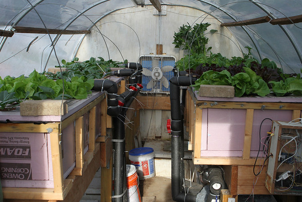 Greenhouse Grow Beds
