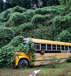 one vine mess photos capture kudzu winding through rural kentucky landscape lexington herald leader [ 1140 x 717 Pixel ]