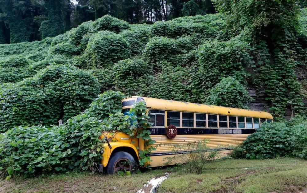 medium resolution of one vine mess photos capture kudzu winding through rural kentucky landscape lexington herald leader