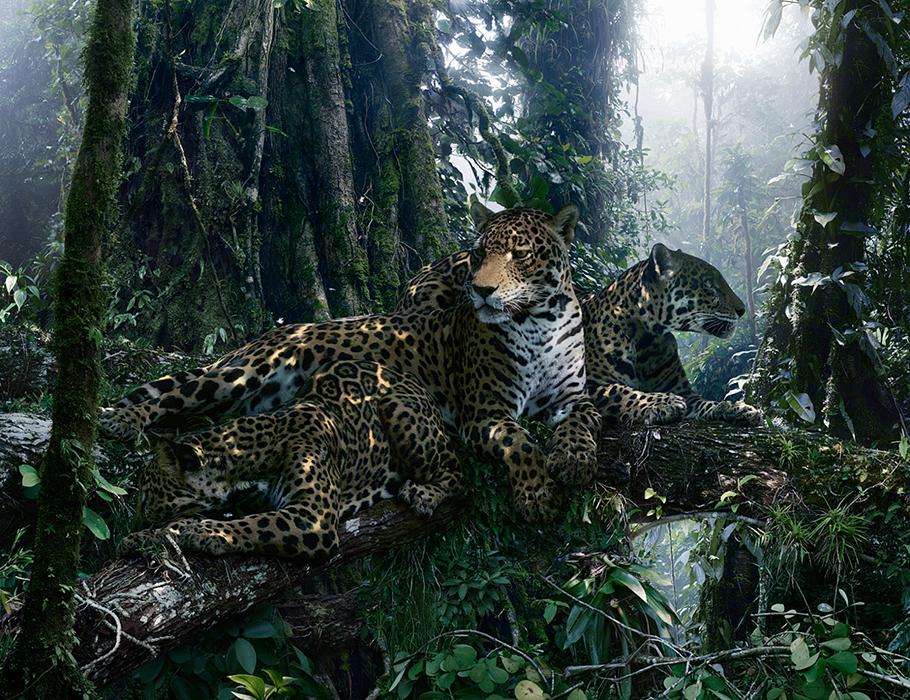 large-simen_johan-untitled-183-jaguars