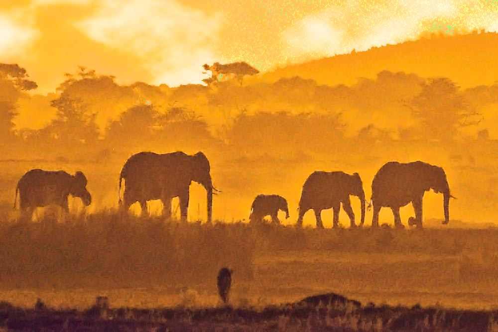 Contre jour coucher de soleil Amboseli Eléphants Kenya safari voyage