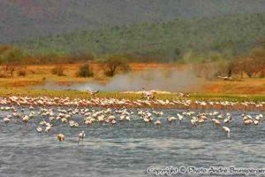 Kenia Parks und Reservate - Karte und Plan des Bogoria reservate in Kenia