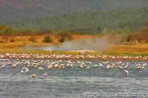lac Bogoria Kenya