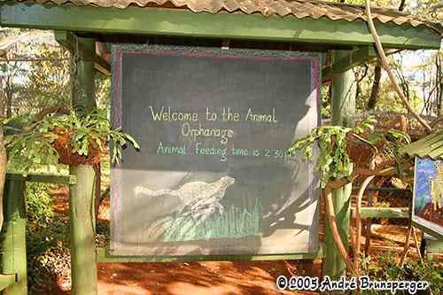 Orphanage, orphelinat des animaux parc Nairobi Kenya