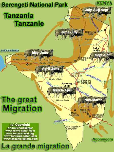 Carte - Safari Chic grande migration