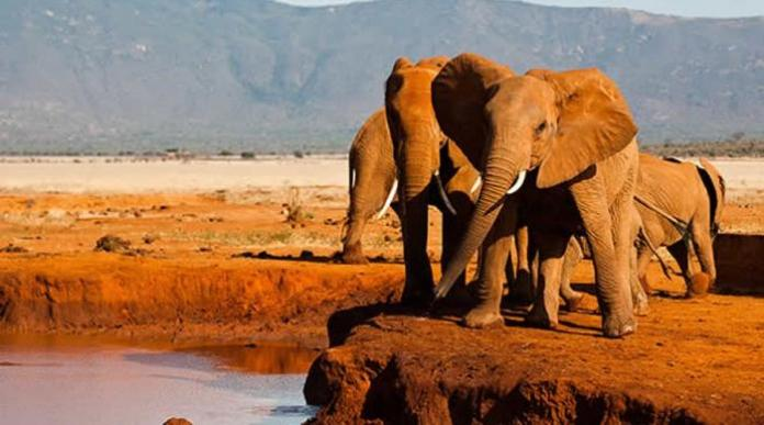 A past photo of elephants at the Tsavo East National Park