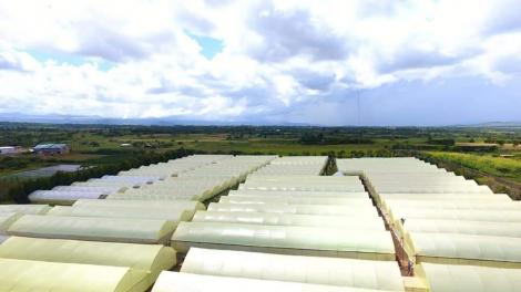 Greenhouses belonging to Goldenscapes Limited.