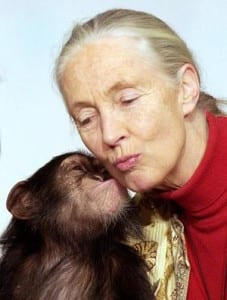 Jane Goodall gets a kiss from one-year old orphaned chimpanzee Pola, during a visit to the Municipal Zoo in Budapest in 2004.