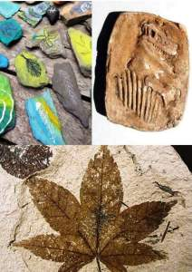 Fossils Image