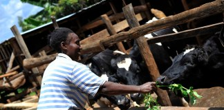 Women in dairy Kenya