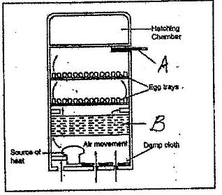The following diagram of an artificial incubator. Study it