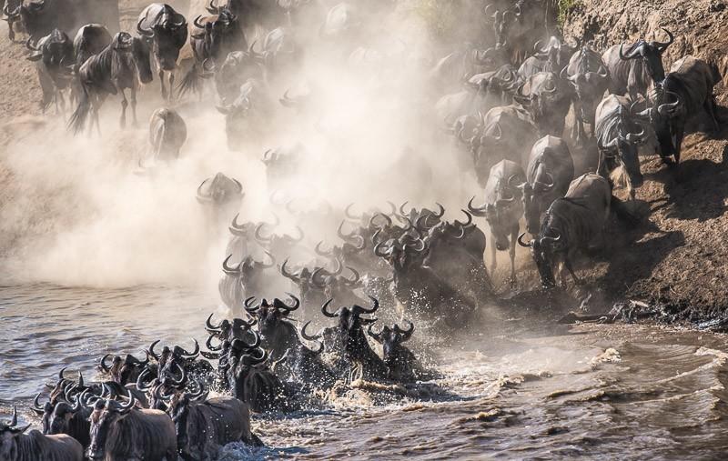 African Safari Kenya