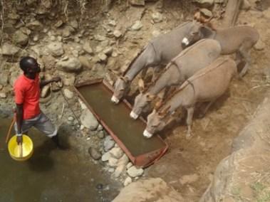 Watering donkeys in Kajiado Central