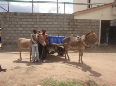 Donkey project (3)
