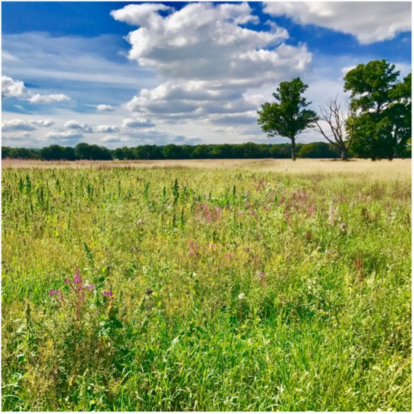 kidmore end parish council field 2