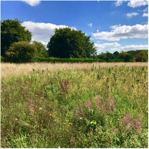 kidmore end parish council field 3