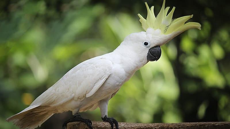 Kenali JenisJenis Burung Kakak Tua dari Indonesia  KepoGaul