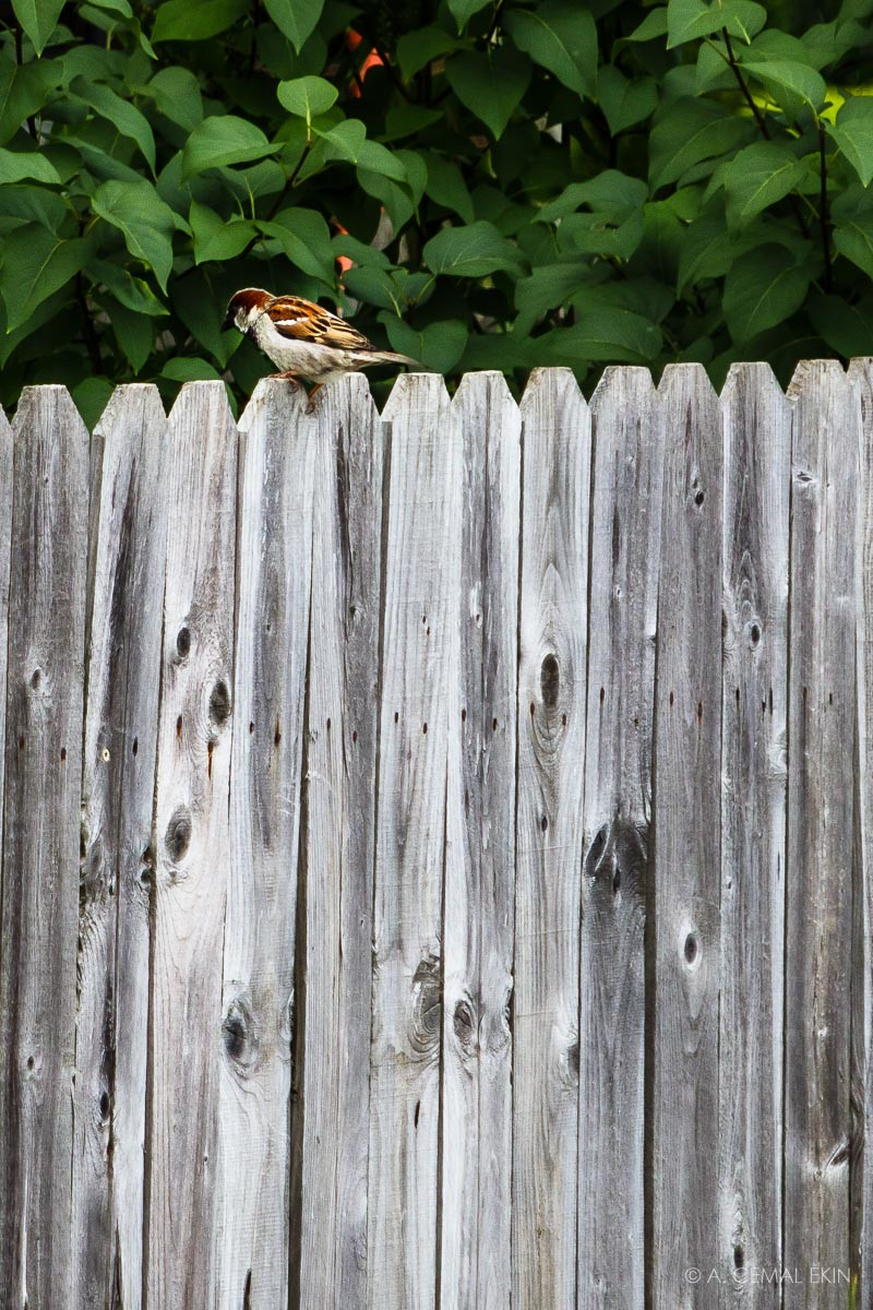 Bird on fence sticks