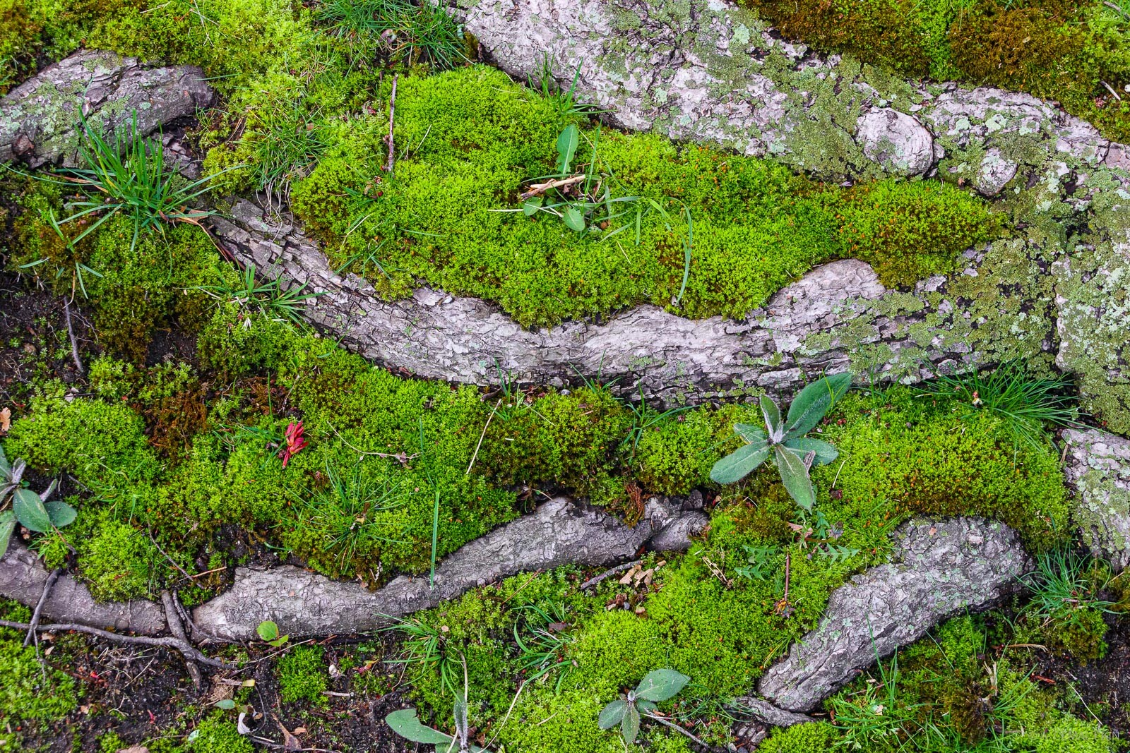 Roots in moss