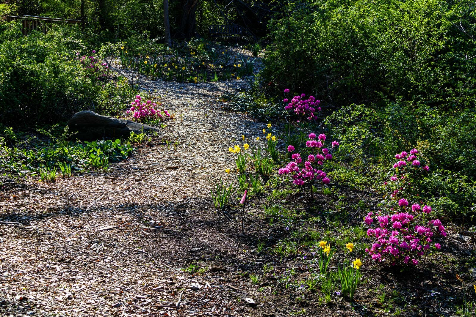 Wilderness to pleasant path