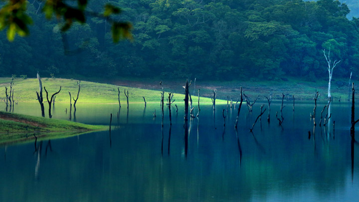 Thekkady Your Gateway to the Wild  Kerala Tourism