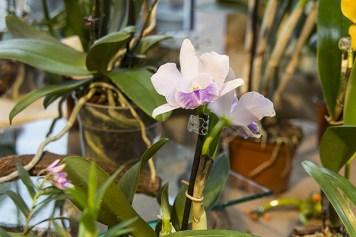 Orchideenausstellung 13-1