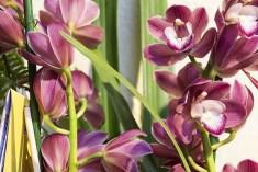 Orchideenausstellung 5-1