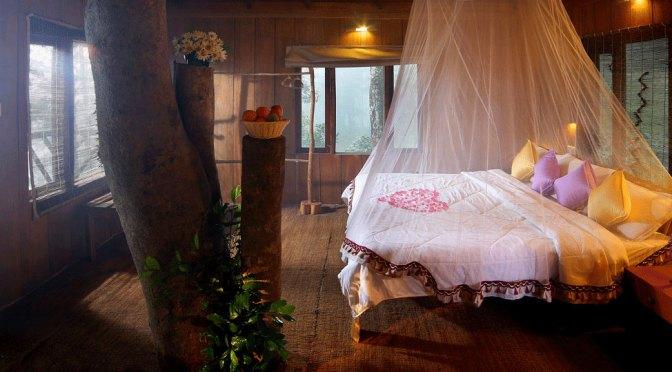 Tree house honeymoon in munnar hills