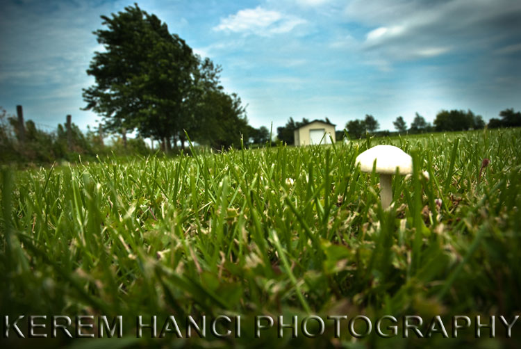 mushroom in a field in iowa