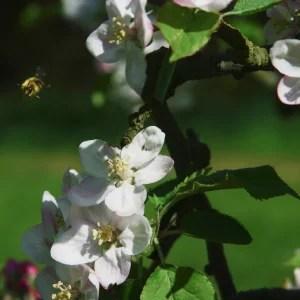 Les fleurs abbaye Sainte Anne de Kergonan