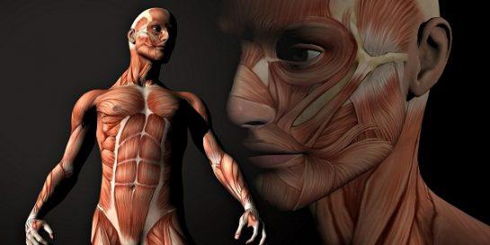Vücudumuzla İlgili Deneyler