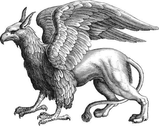 Griffon veya Griffin Hakkında Bilgi