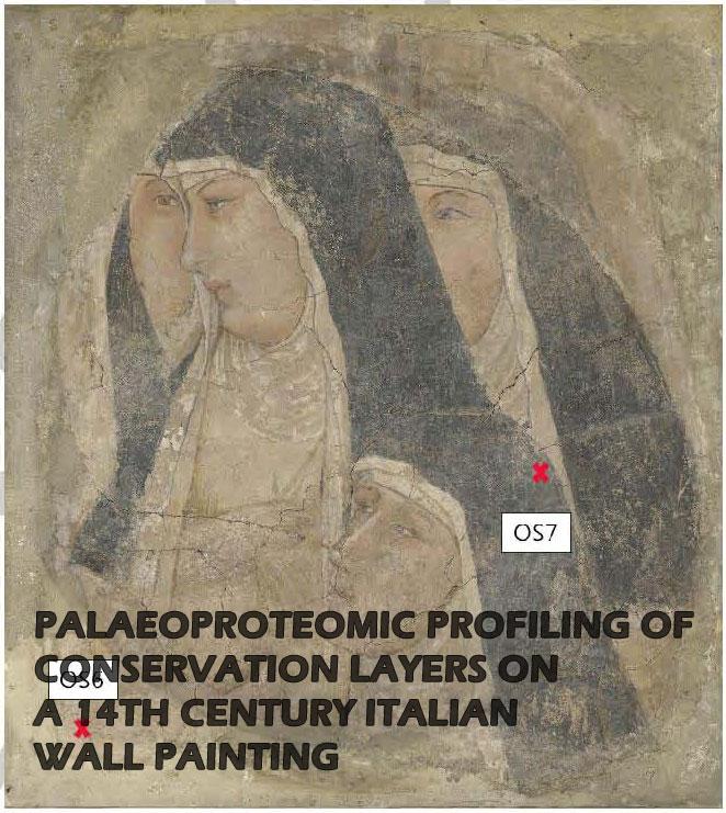 Le nuove frontiere della paleoproteomica: una collaborazione proficua tra ricercatori italiani e danesi