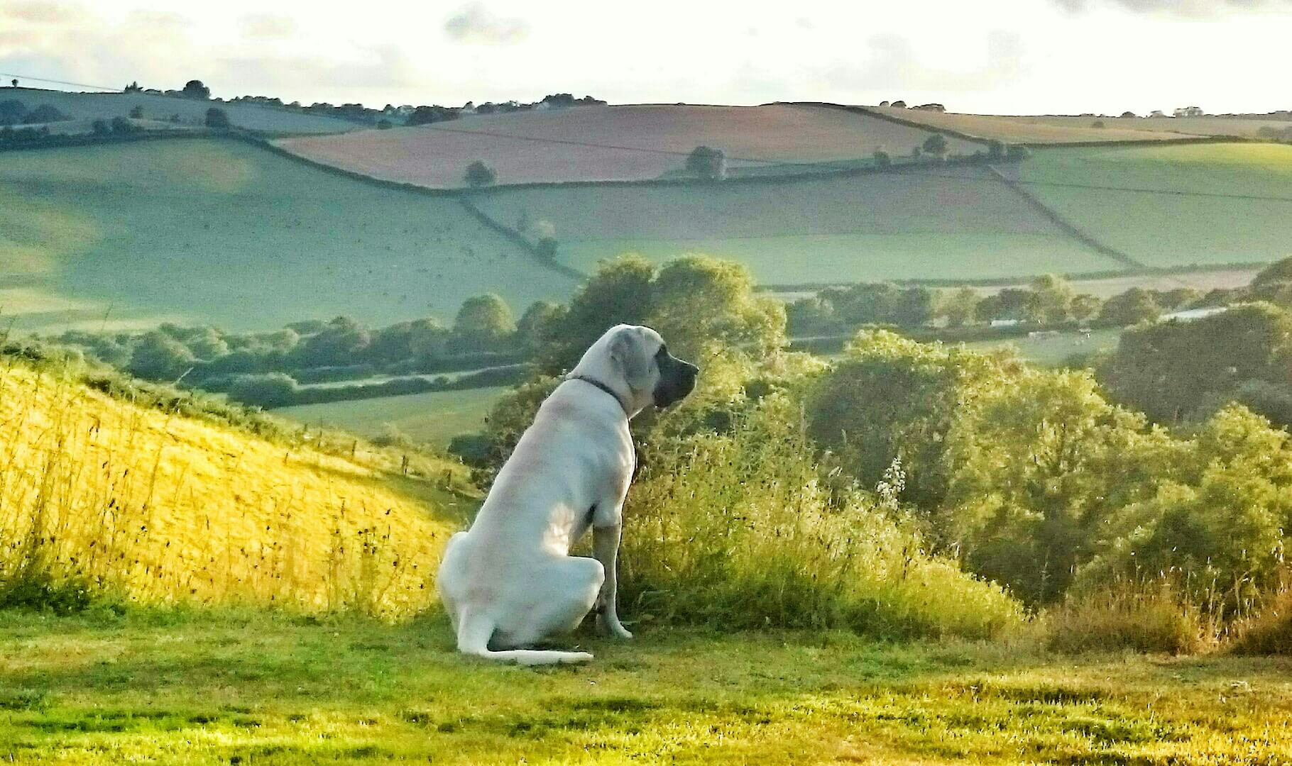 places to buy sofas in cornwall modular leather corner sofa uk dog friendly holiday cottages well behaved