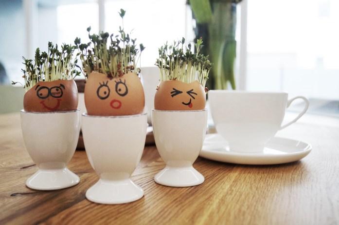 Kresse-Eier nach 4 Tagen