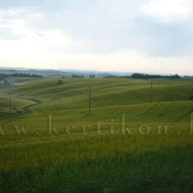 Monteroni d'Arbia lágyan ívelt tája
