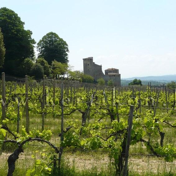 Toiano, Palazzaccio; szőlős kert
