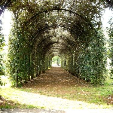 Villa Cetinale, lugas az oldalkertben