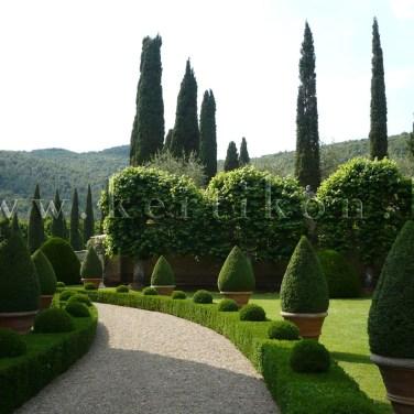 Villa Cetinale, a közvetlen villaépület zöld gyűrűje